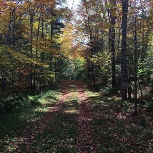 hikingtrail tn